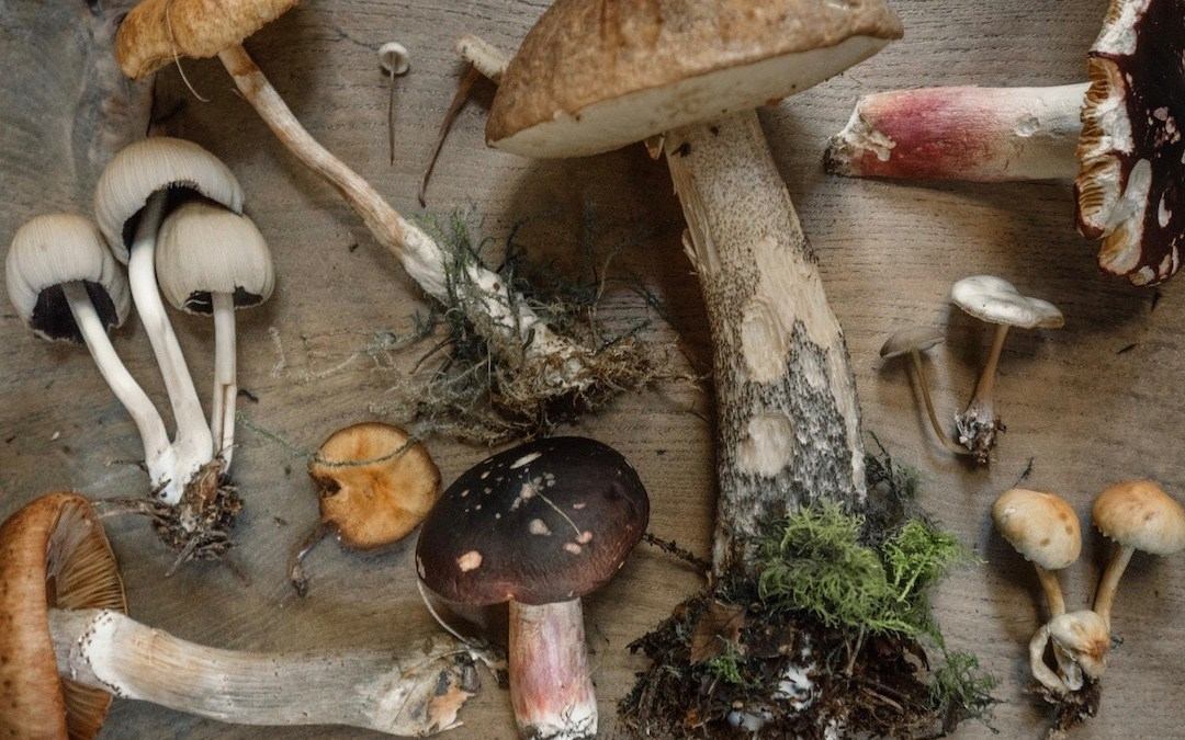 paddenstoelsupplementen