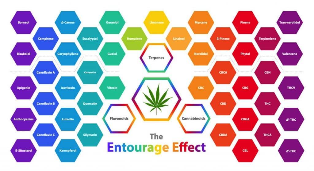 Was genau ist der Entourage-Effekt?